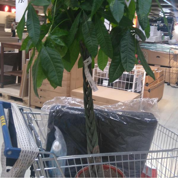 Ikea Einkaufwagen