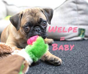 Welpe und Baby Gemeinsamkeiten